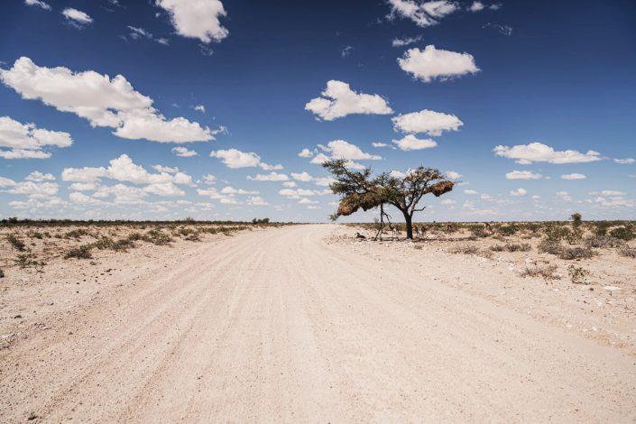 Conseil et Itinéraire en Namibie - Parc National d'Etosha